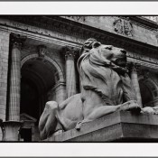 Construcción de ciudadanía desde la Biblioteca Pública de Nueva York